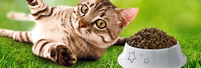 Sausas kačių maistas